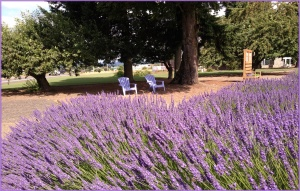 A Lavender Day