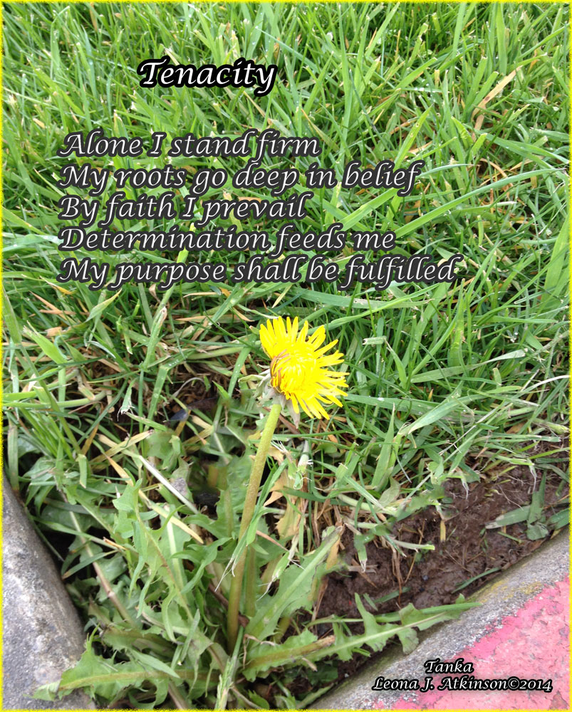 Dandelion photo and poem on tenacity