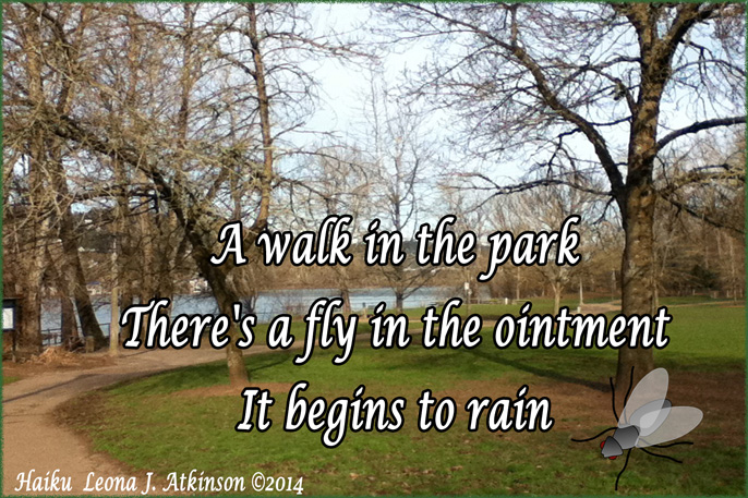 A Fly--Haiku--Photo of Park and a Fly