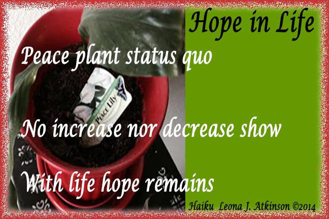 Peace Plant--Haiku