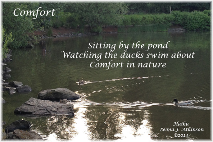 Comfort--Haiku--ducks, pond
