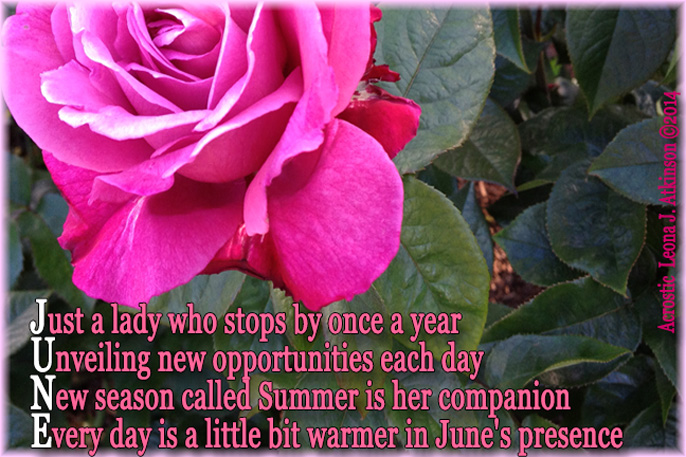JUNE Acrostic--Photo of a Rose