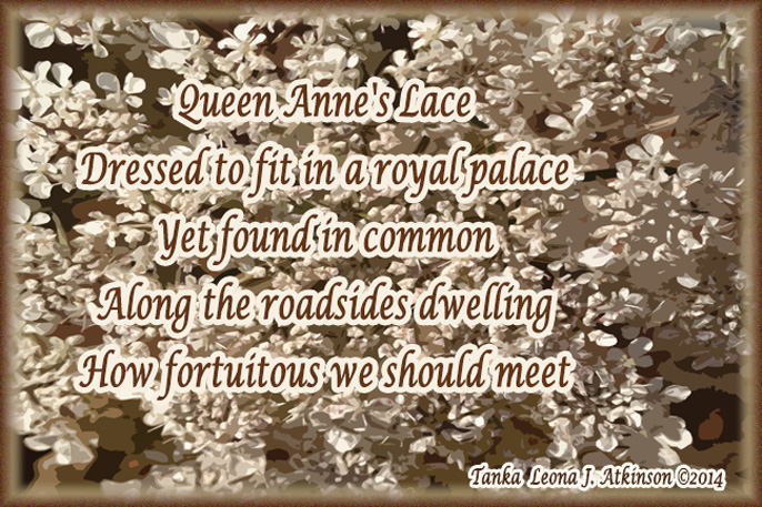 Queen Anne's Lace flower photograph--Tanka poem