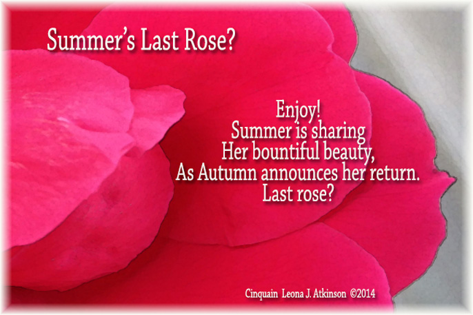 Summrer's Last Rose? Cinquain poem--picture of a rose