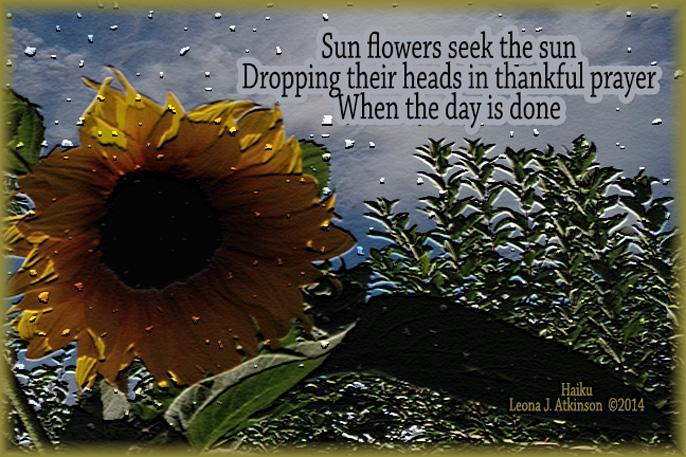 Sunflowetr-Haiku poem