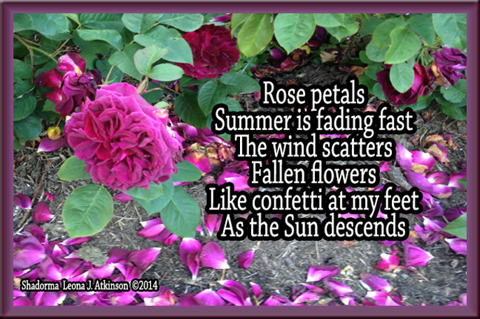 "Rose Petals, Shadorma poem titled "" Waning"""