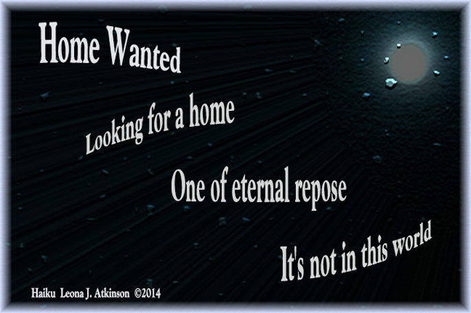 Home Wanted--Haiku