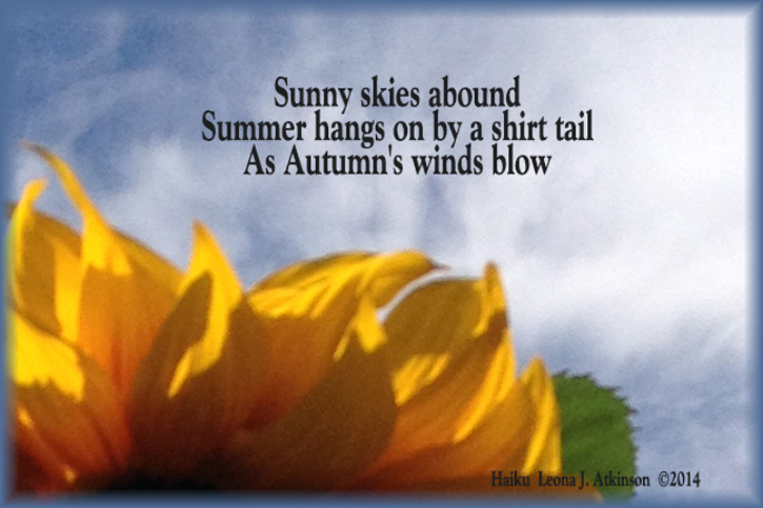 Sunflower--Haiku about last days of Summer