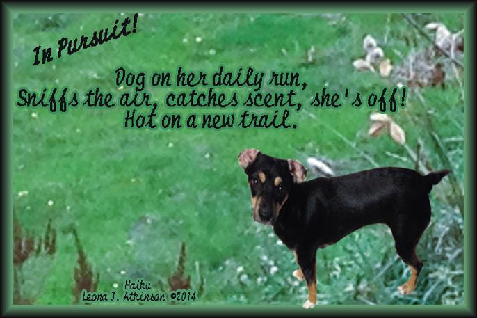 Haiku, dog, nature
