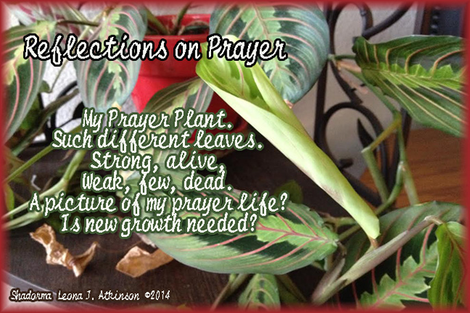 Shadorma poem about prayer--prayer plant photo