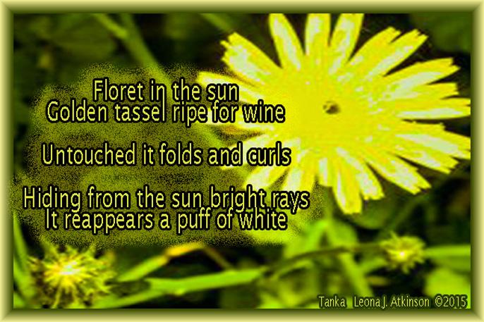 Dandelion--Tanka poem