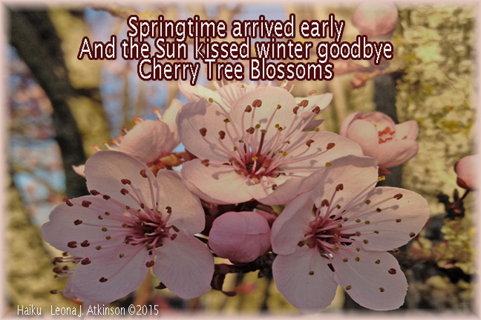 Haiku about Cherry Blossoms