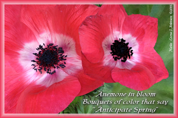 Anemone flowers--Haiku poem