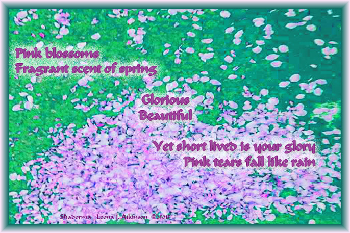 Cherry Blossom Tree Petals--Shadorma poem