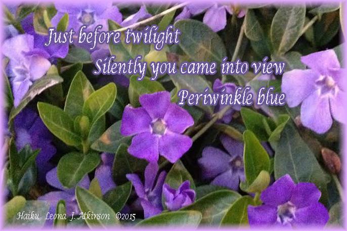 Periwinkle flowering--Haiku