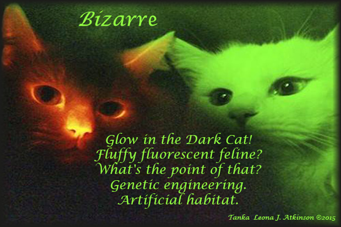 Tanka poem about Glow-in-the-Dark Cats--genetic engineering