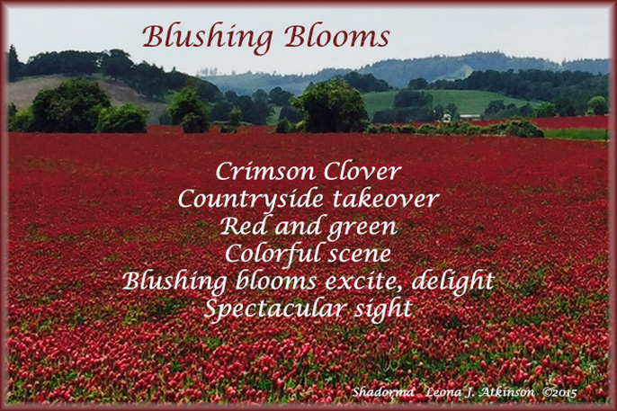 Crimson Clover photo and Shadorma poem