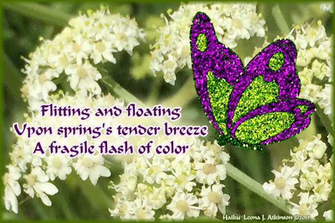 Butterfly Haiku