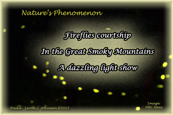Fireflies in Great Smoky Mountains--Haiku