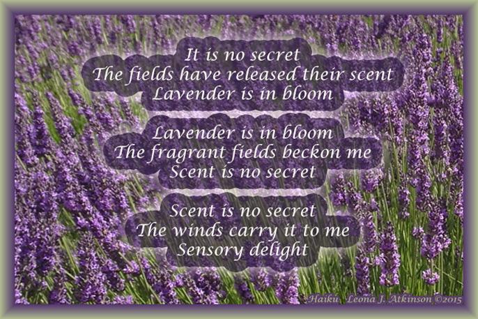 Lavender Field--Haiku Cascade