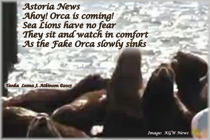 Sea Lion Invasion in Astoria, OR.  KGW News Report--Tanka poem