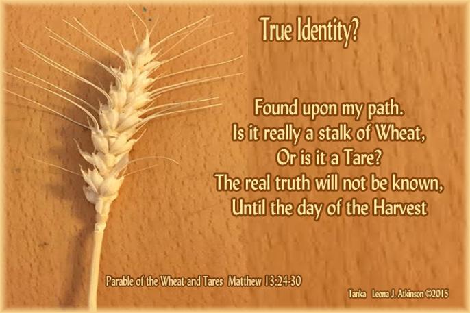 Stalk of Wheat?--Tanka poem