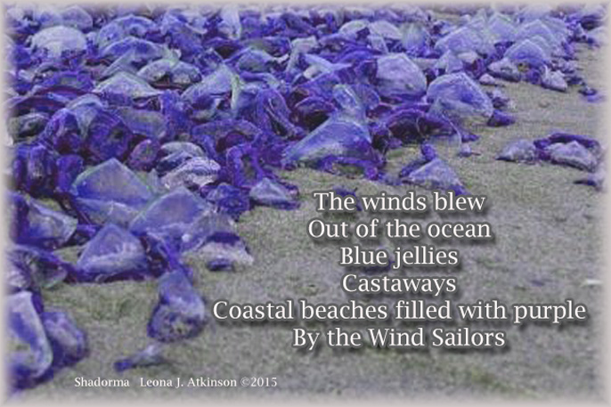 Shadorma poem about Blue Jellyfish on American beaches--news from National Geographic