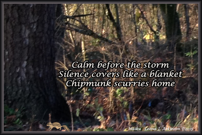 Haiku-forest-calm before the storm