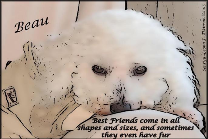 Dog photo--Senryu poem