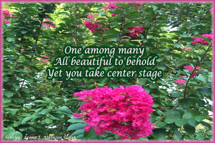 Senryu poem--Pink flowers