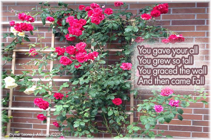 Roses in bloom--Rhyme
