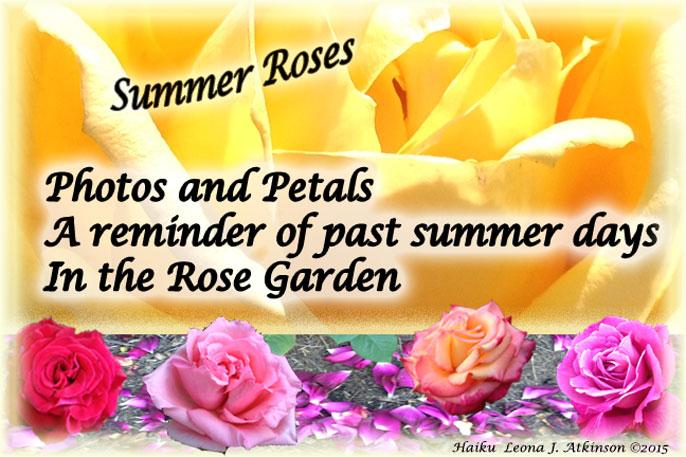 Summer Roses--Haiku