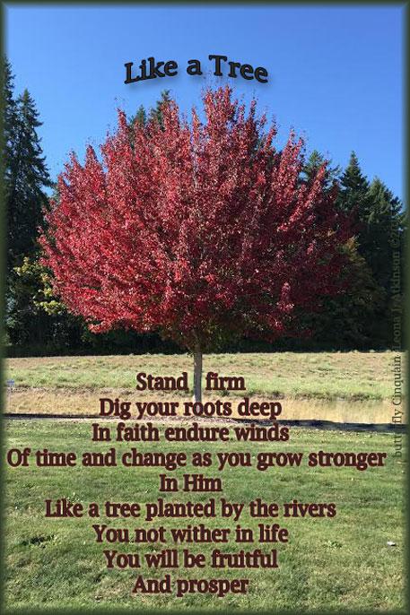 Fall Tree--Butterfly Cinquain poem