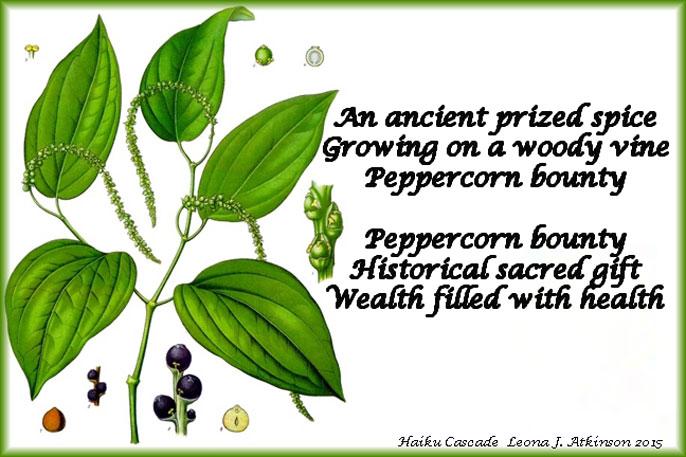 Black Pepper--Haiku