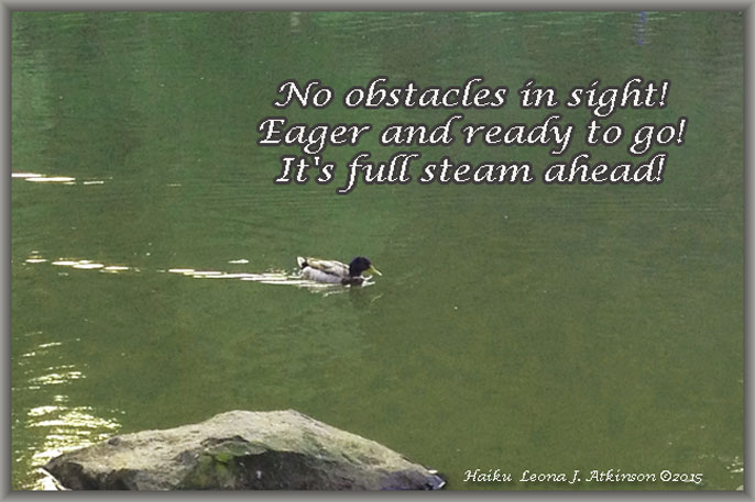 Full Steam--Haiku--Duck in water