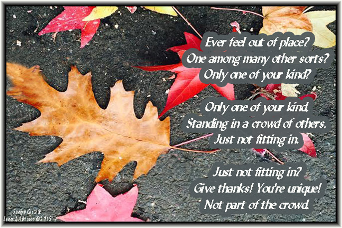 One Oak Leaf among many Maple leaves--Senryu Cascade poem
