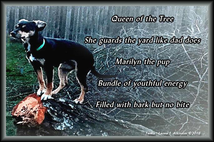 dog, tree, Tanka poem
