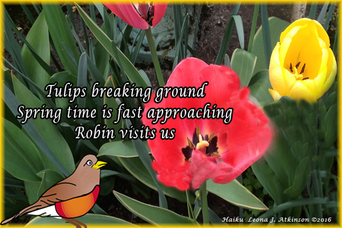 Signs of Spring Haiku--robin, tulips