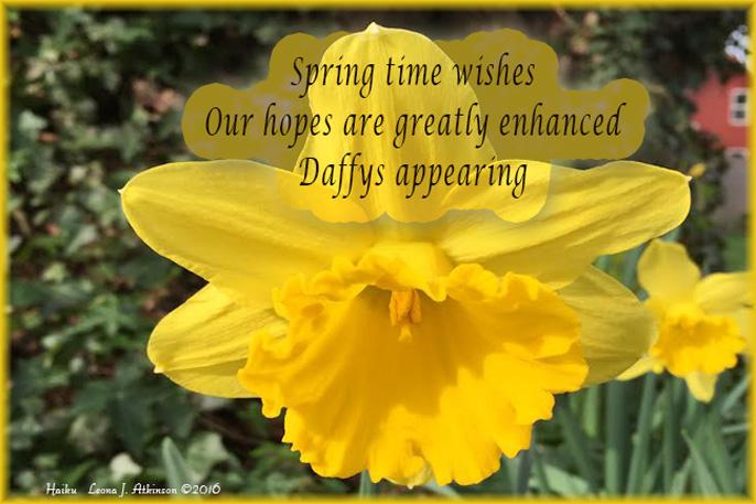 Haiku--Daffodils--Springtime