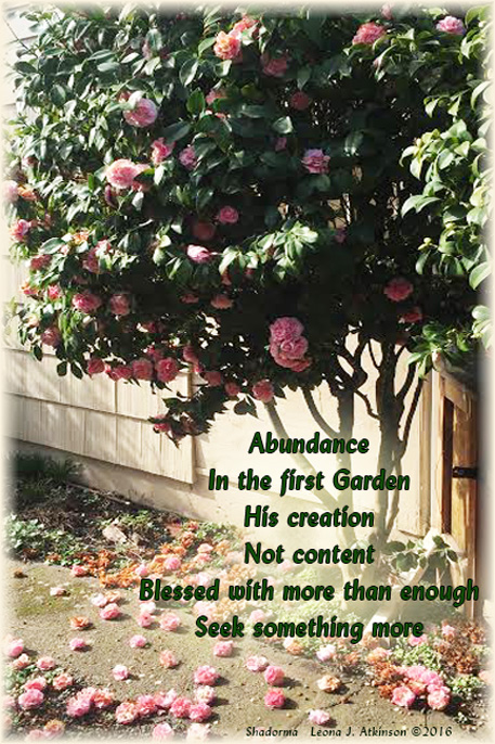 Shadorma poem--blooming rose bush--adbundance of blooms