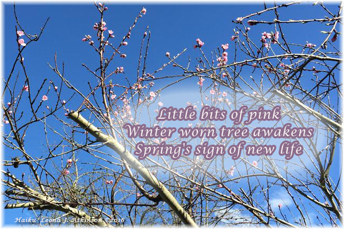 Sign of Spring--Pink Tree budding out--Haiku