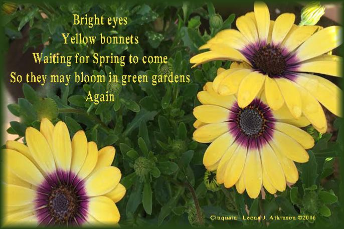 Spring Flowers, Cinquain poem
