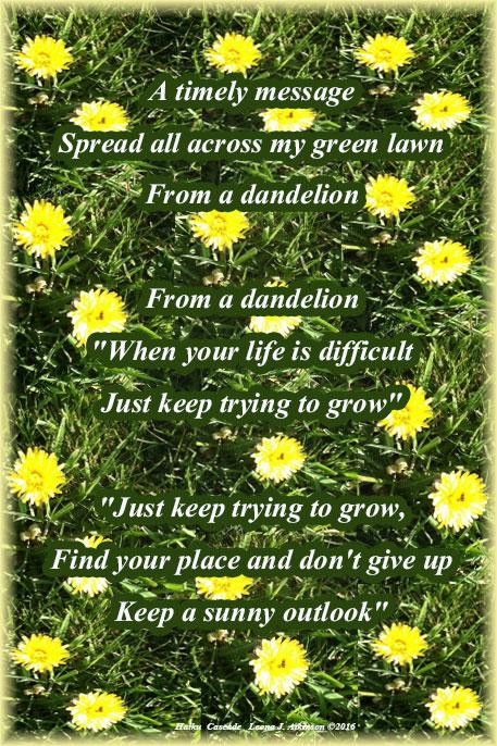 Dandelions--Haiku Cascade poetry