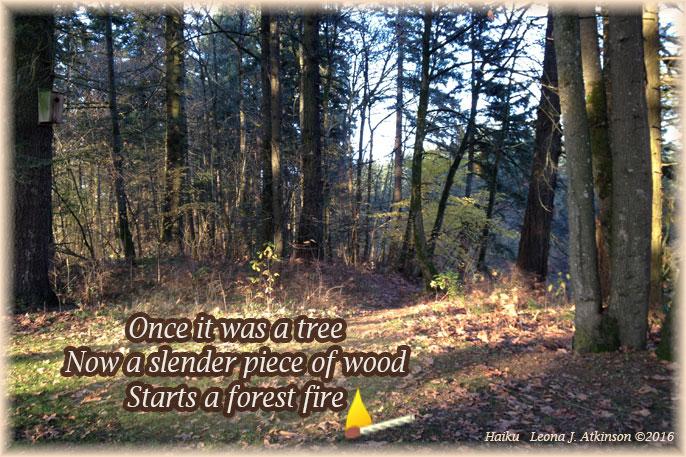 Forest--Haiku