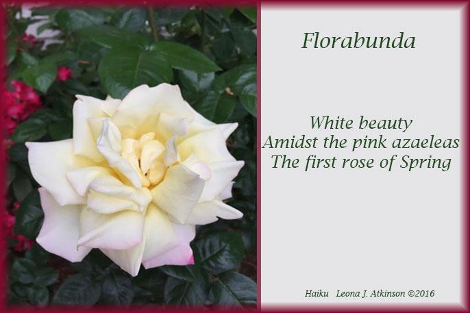 Haiku--Rose-spring