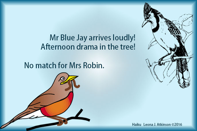 out-matched--robin vs bluejay--Haiku