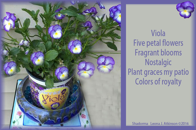 Viola--flower-plant--Shadorma poem