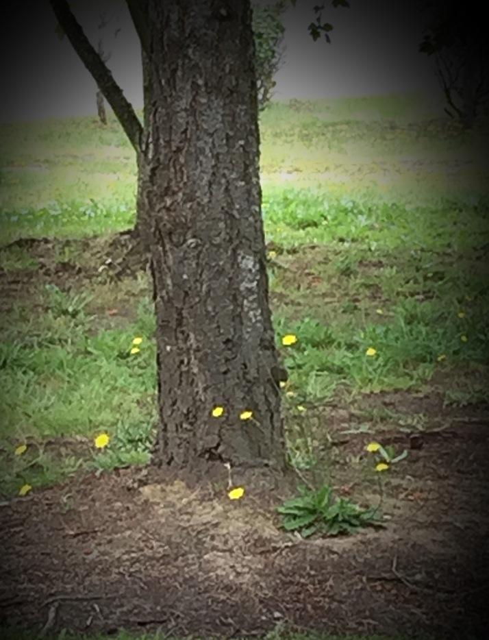 tree, yellow flowers