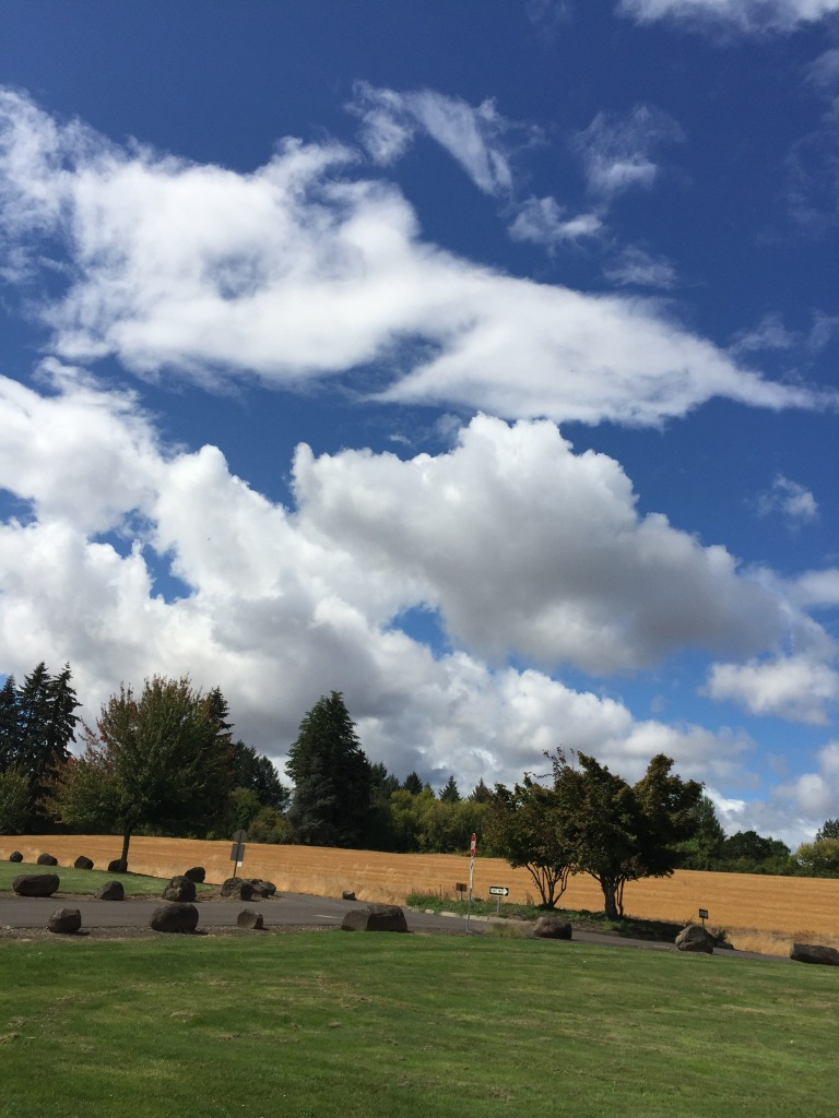sky, clouds, trees, grass, wheat field, rocks, September day