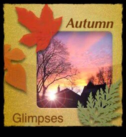 Autumn Glimpses, sunshine, Fall leaves